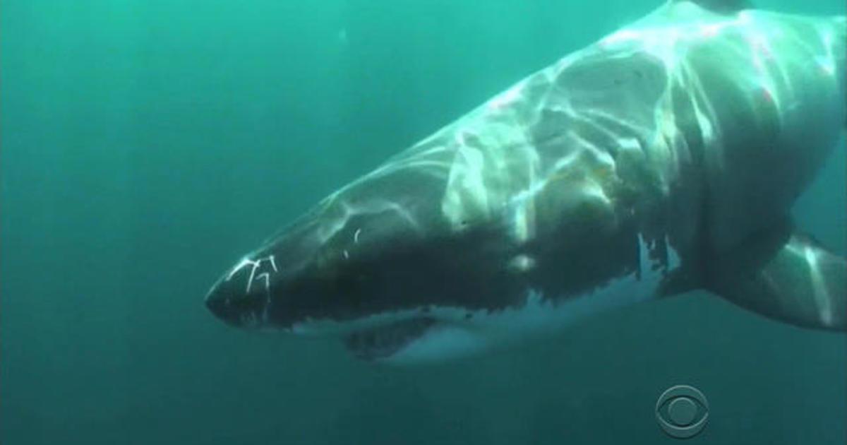 """Surfista muere después de un ataque de tiburón """"sin precedentes"""" cerca de la popular playa de Australia"""